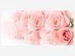 Стол раздвижной Грация Розовые розы-Белый